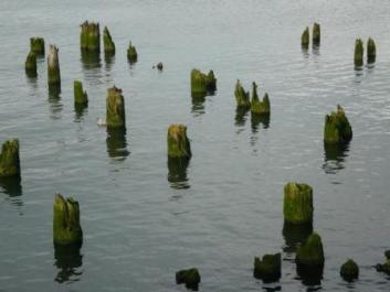 pilings-in-astoria-ii.JPG