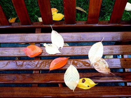 fallen-leaves-on-bench-webpage