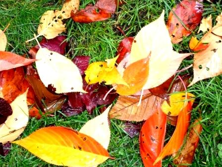 leaves-on-grass-webpage1