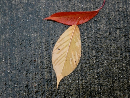 leaves-on-pavement-webpage2