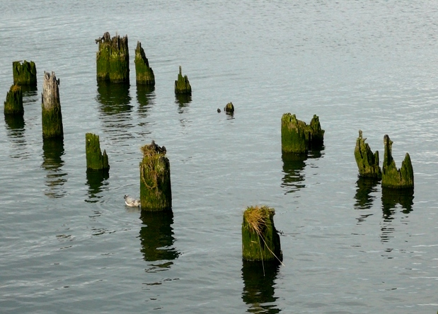 pilings-in-astoria-slow-blogging