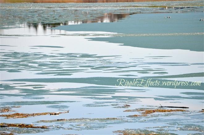 Melting Ice on Glenmore Reservoir