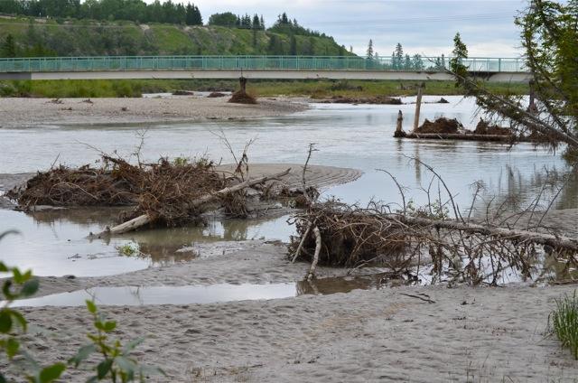Weaselhead Natural Area- Debris & Mud
