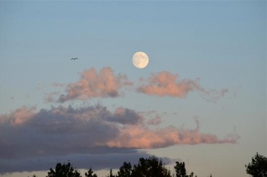 Moonrise 4