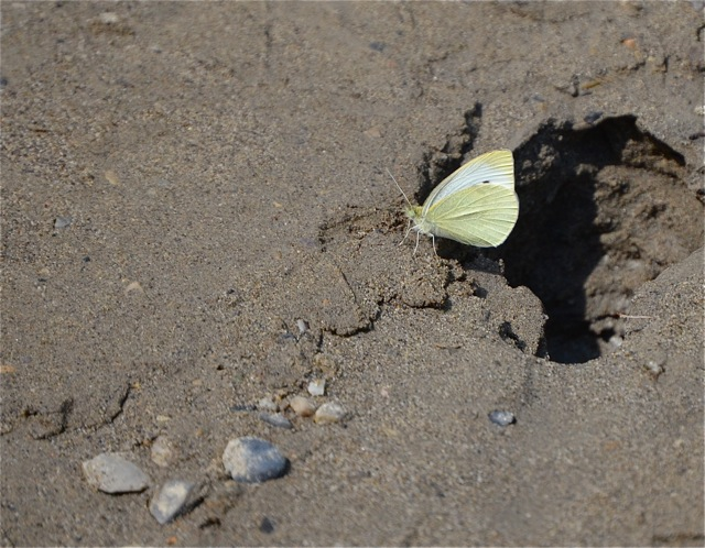 Butterfly on the sandy shore