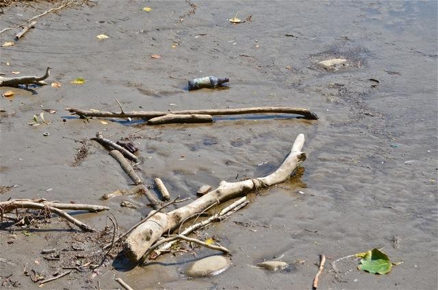 Muddy shore