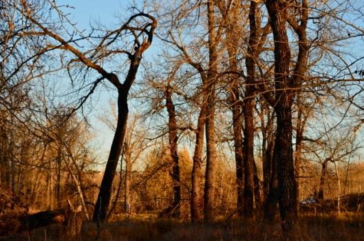 Trees in the setting sun