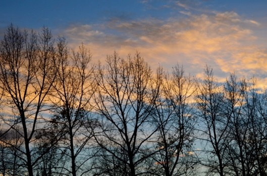 Trees reaching for the evening sky