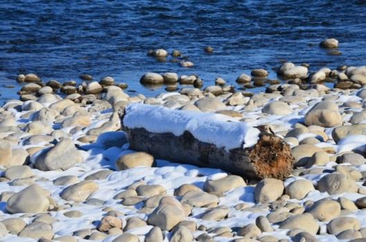 Snow covered log