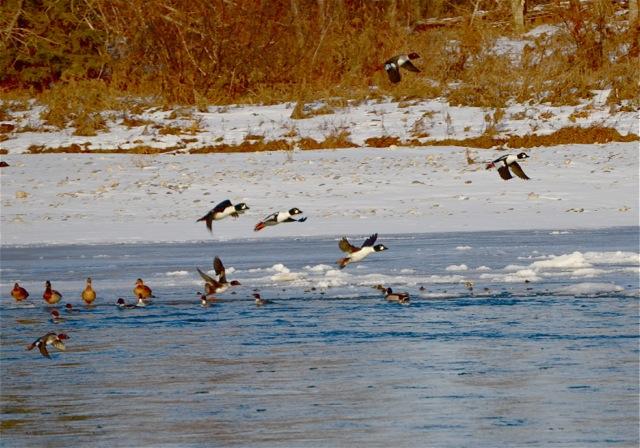 Duck Activities