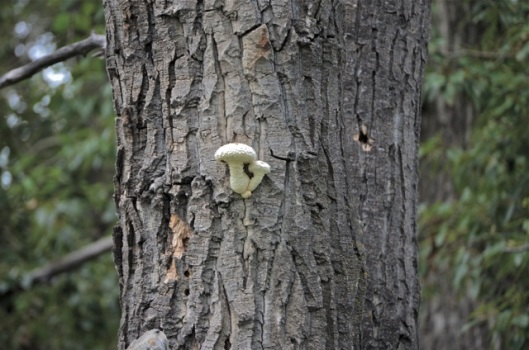 Mushrooms growing out of a tree