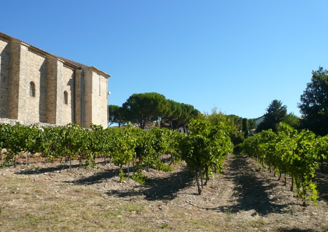 Vineyard by 12th Century Chapel in Vaison