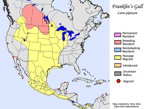 Franklin's Gulls Map 1