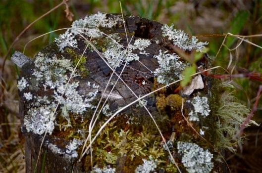 Moss on tree stump
