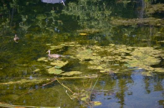 Monet Effects