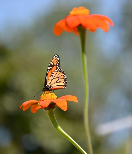 The Monarch 3