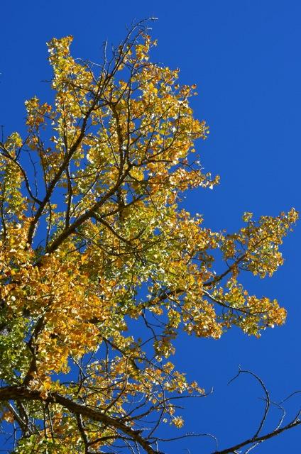 Blue & Yellow 1