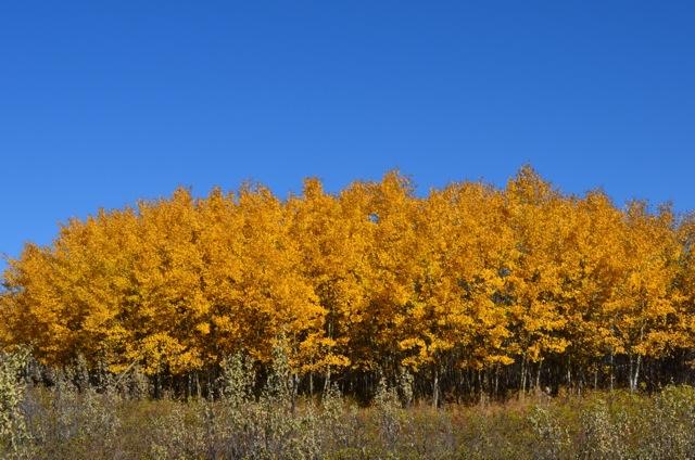 Shades of Yellow 8