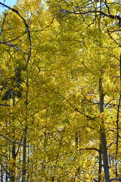The Lighter Shade of Yellow