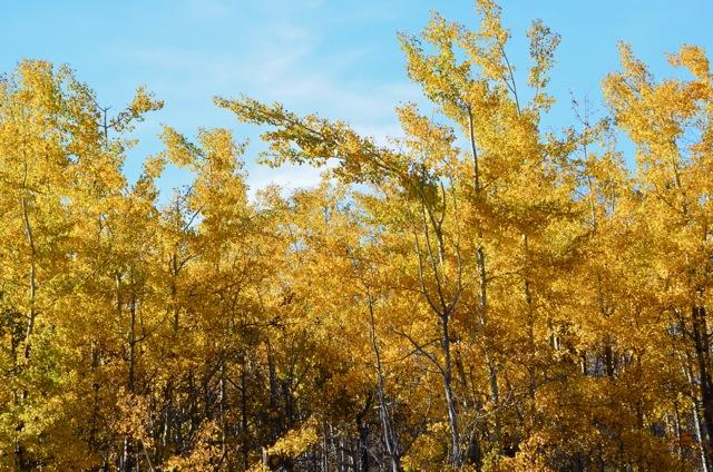 Wabi-sabi yellow