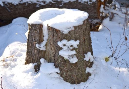 Snowy Koala