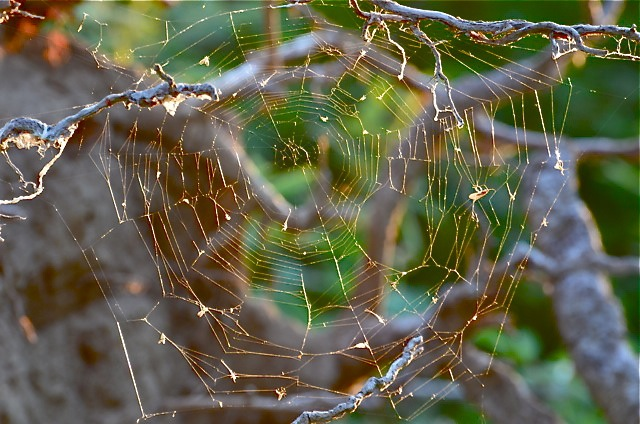 Cobweb in Early Evening