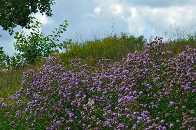 I can imagine lavendar