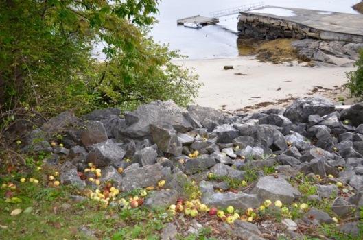 Apples among rocks