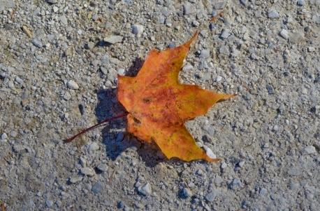 The Leaf