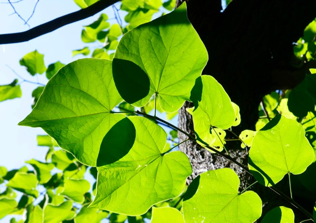 Leaves wearing sunglasses.jpg