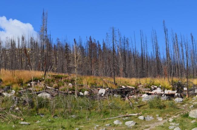 Wild Fire effect