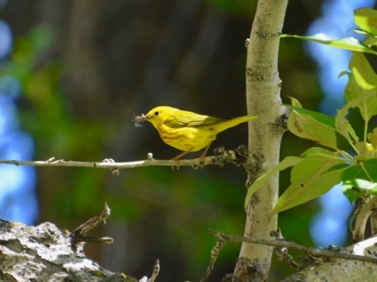 The Hungry Warbler