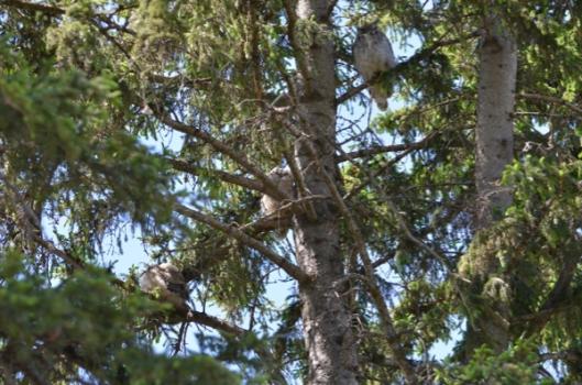 Spot the owls.jpg
