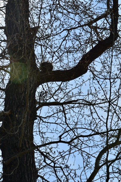 Ball on tree